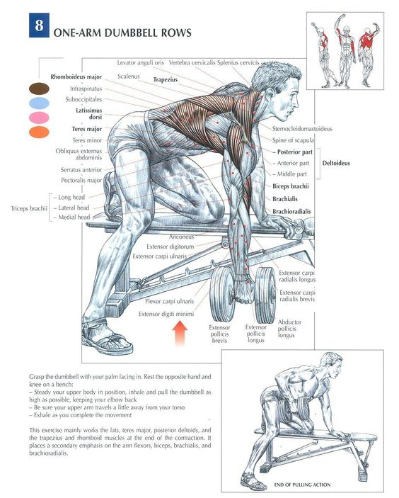 body anatomy muscles fitness pinterest awesome the shoulder and songs. Black Bedroom Furniture Sets. Home Design Ideas