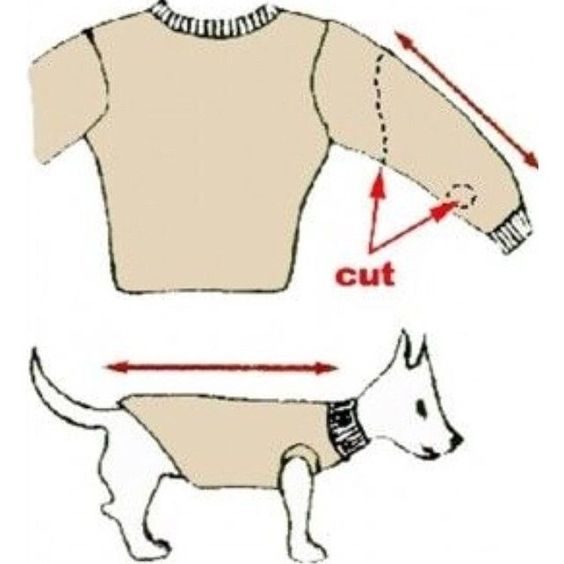 Turn Old Sweater Into Pet Clothes Pictures, Photos, and Images for Facebook, Tumblr, Pinterest, and Twitter