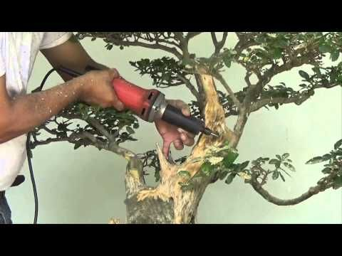 Bonsai Tutorials For Beginners How To Make Bonsai Trunk Look Fatter Youtube Gardening For Beginners Bonsai Tree Care Bonsai Tree