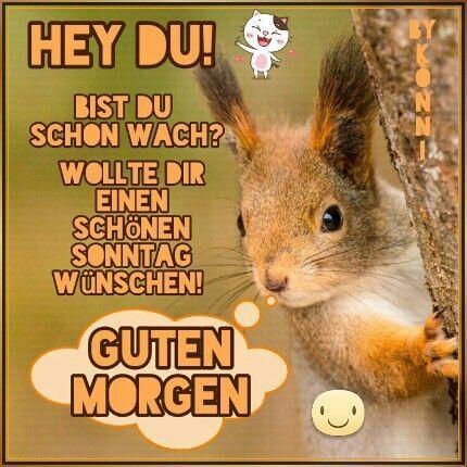 Sonntag Lustig Guten Morgen Bilder Und Spruche Fur Whatsapp Und