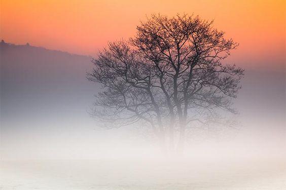 Fotostrecken - Wetter Bilder und Fotos - WetterOnline Weiß verreifte Wiesen und Nebelbänke erzeugen im Lahntal eine mystische Stimmung. Bild: Christoph Weber