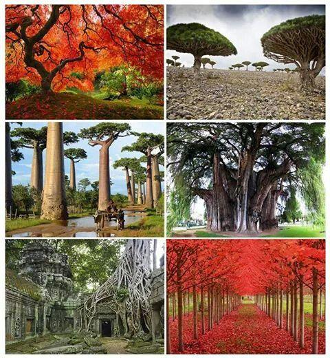 Árboles impresionantes