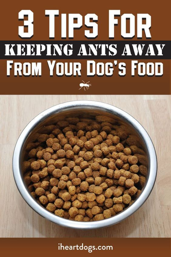 3 tips for keeping ants away from your dog s food - Keep ants away in simple ways ...