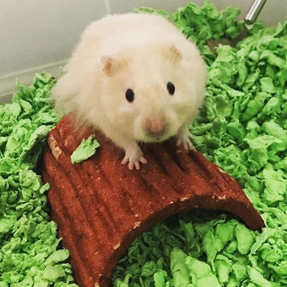 Now Thats It Spring It Means Time To Burrow Into Carefresh Grassy Green Smallpetsbiglove Only Available At Petsmart Repost 2spi Small Pets Pet Beds Pets