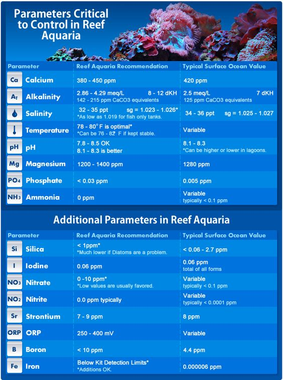 Maintaining proper reef tank parameters is essential to for Tropical fish temperature chart