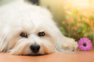 Do All Dogs (and Other Pets) Really Go to Heaven?