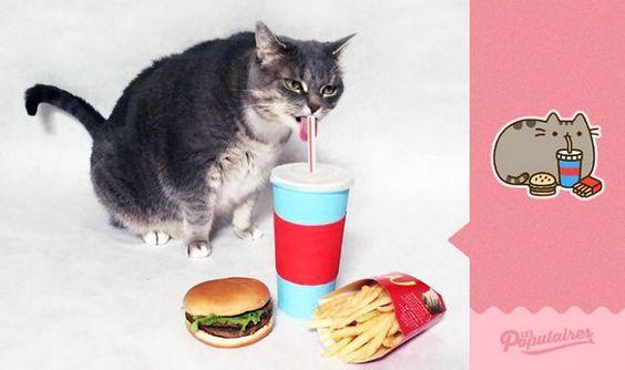O canadense Julien Therrien recriou os stickers do Pusheen, o gato do Messenger, com o seu gato real.