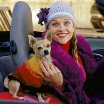THE most famous chihuahua! Where Bruiser got his name from :)