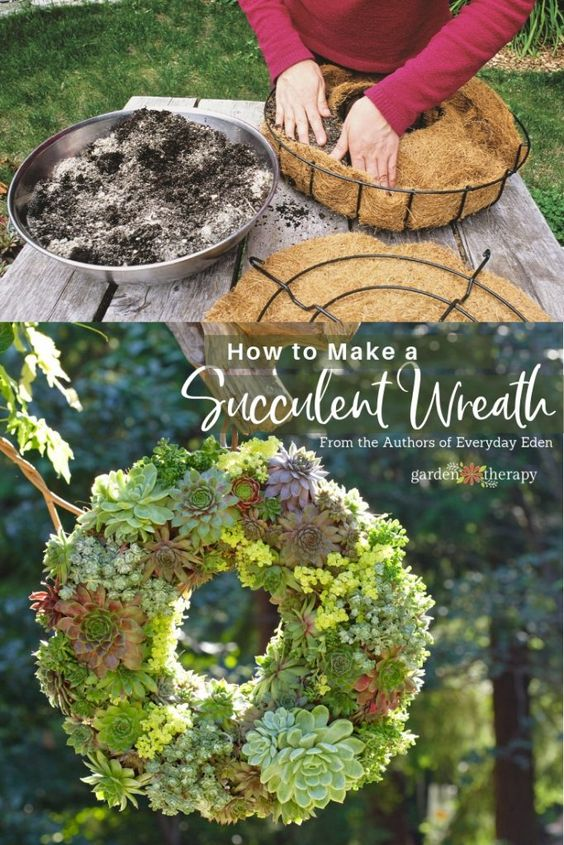 How to Make a Living Semper-Viva Succulent Wreath. This living succulent wreath is much easier to make than you think. It will take some time and finesse to put together, but as it fills in it will wow anyone who sees it. #gardentherapy #succulents #wreaths