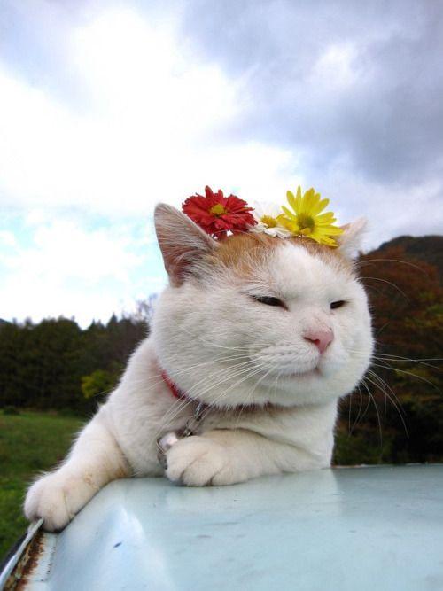 hippyness:  too freakin cute
