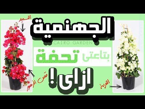 اسرار زهرة الجهنمية فى ست دقائق كيف تجعل زهور المجنونة تزهر عندك بغزاره طول الوقت روعة Youtube Home Entrance Decor Entrance Decor Garden