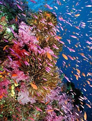 Under The Sea Fiji