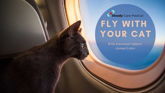 Guide To Fly With Your Cat With Emotional Support Animal Letter Emotional Support Animal Support Animal Emotional Support