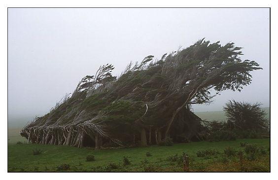 Projekt Mystik: Sturmgepeitschte Bäume am Slope Point von Oliver Grebenstein