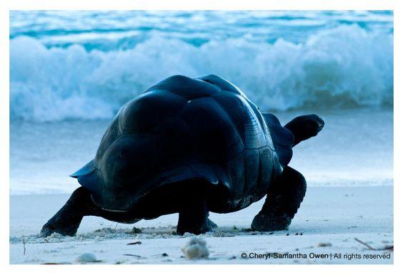Aldabra | Sam Owen Photography