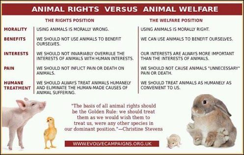 testing on animals vs animal rights There is a big difference between animal rights and animal welfare and it needs to be clarified the american veterinary medical association has taken a formal position defining the difference between the two labels, animal rights vs animal welfare.