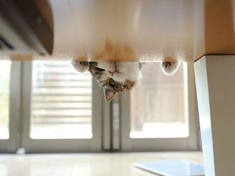 Upside down Maru!