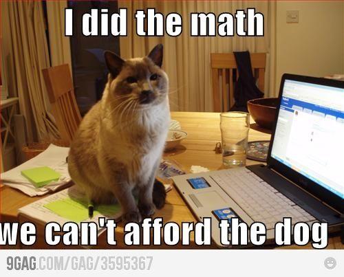LOL!: Funny Animals, Funny Pics, Can T Afford, Funny Cats, Crazy Cat, Funny Stuff, Funnystuff, Cat Lady