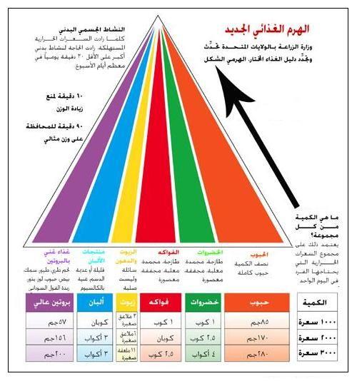 الهرم الغذائي المدرب العربي Clip Cards Pie Chart Chart