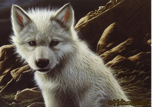 White Wolf : Authentic native american and wildlife paintings of Heléne Burrow
