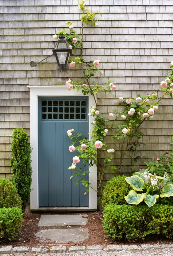 Climbing Roses on Nantucket Island // stacieflinner.com