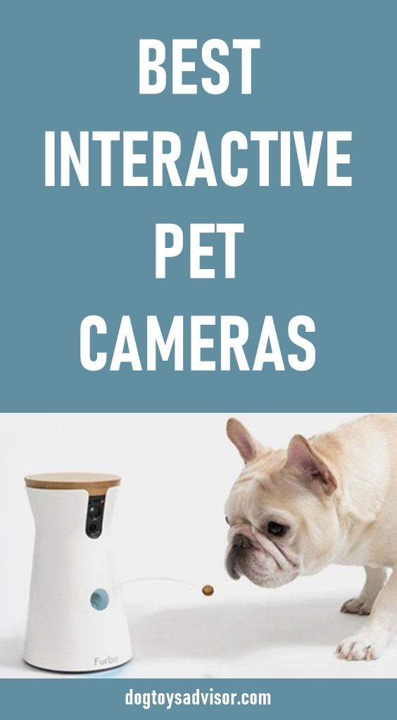 Pet Cameras Are The Best Interactive Toys For Dogs To Keep Them Busy When They Re Home Alone You Can Play With Your Dog While Pet Camera Dog Toys Dog Gadgets