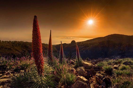 Atardecer sobre Tajinastes, por tryky, tercer premio en la categoría Fotografía de paisaje del concurso fotográfico «La floración del Tajinaste»
