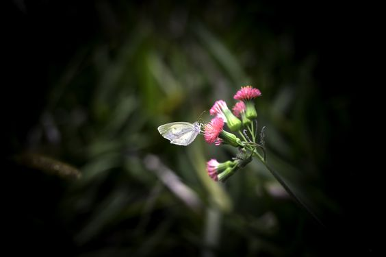 The beauty in small things by Roberto Epifänio on 500px