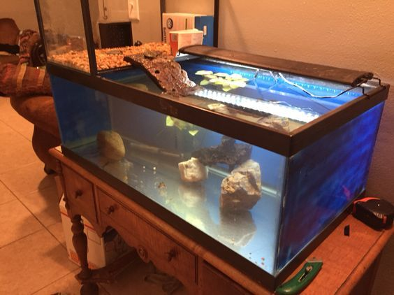 ♥ Pet Turtle ♥ Check out this turtle topper above tank basking platform made from a 10 gallon tank on it's side.: