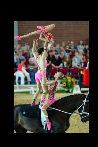 Team Neuss Of Germany Vaulting Pinterest Germany And