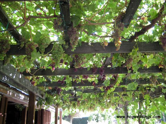 A terrace wraps around the barn with a grape arbor. It is covered with grape vines May through October.