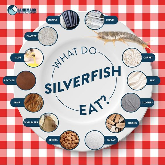 What Do Silverfish Eat That Question Might Be Better Phrased What Do Silverfish Not Eat Silverfish Eat So Silverfish Get Rid Of Silverfish Diy Pest Control