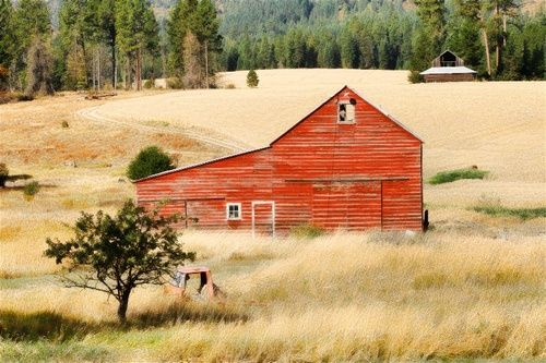 The Barn in the Golden Field