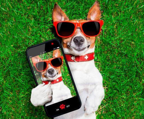 Aplicaciones recomendadas para los amantes de los animales