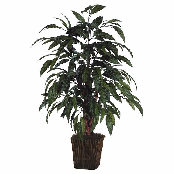 Mango Bush Square Willow Container Plant