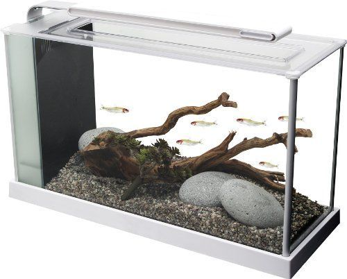 The Ultimate Guide To Modern Contemporary Fish Tanks With Big Style Spiffy Pet Products In 2020 Nano Aquarium Aquarium Kit Betta Fish Tank
