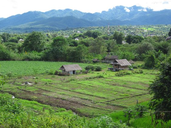 Rice fields and landscape. #Thailand