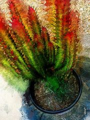 Good Luck Cactus (ironartist) Tags: cactus plant abstract art cacti painting…