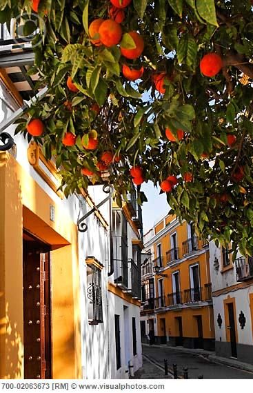 Sevilla, Spain. Most every street is this cute. With oranges growing everywhere.