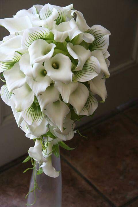 .White cascading Calla lily bouquet. #whitebouquet #cascading #callalily