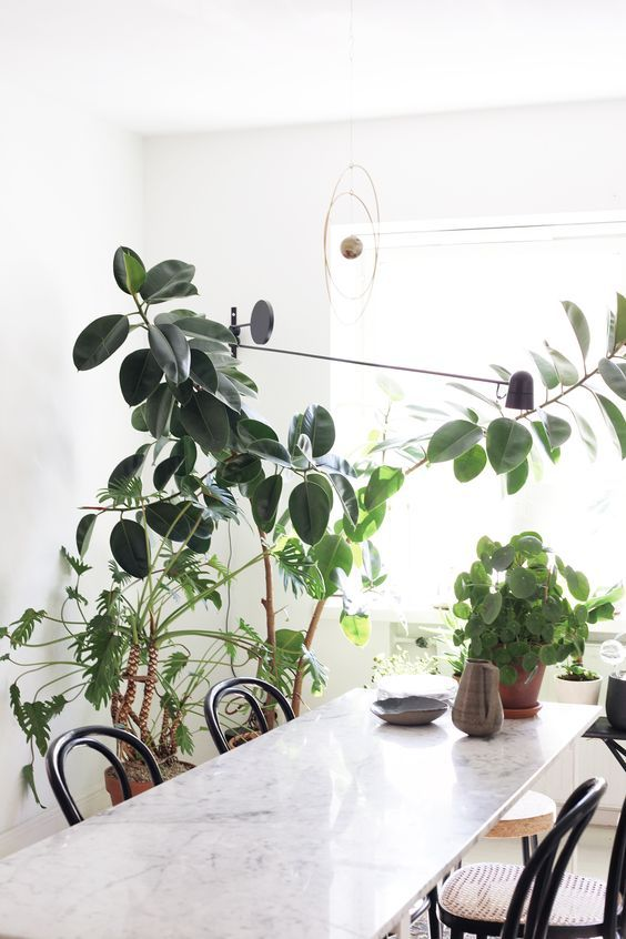 dreamy leafy dining space