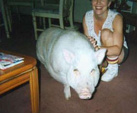 Pigs 4 ever... best site for pot bellied pig info