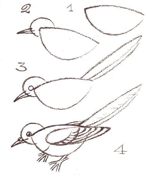 Comment dessiner un oiseau 2761 arts pla pinterest oiseaux dessins d 39 enfant et enfant - Dessiner un oiseau ...