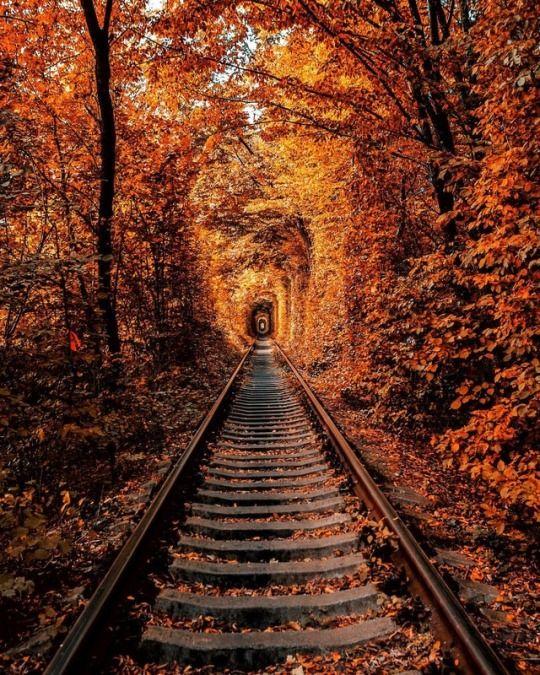 Tunnel Of Love Ukraine Autumn Photography Autumn Scenery Nature Photography