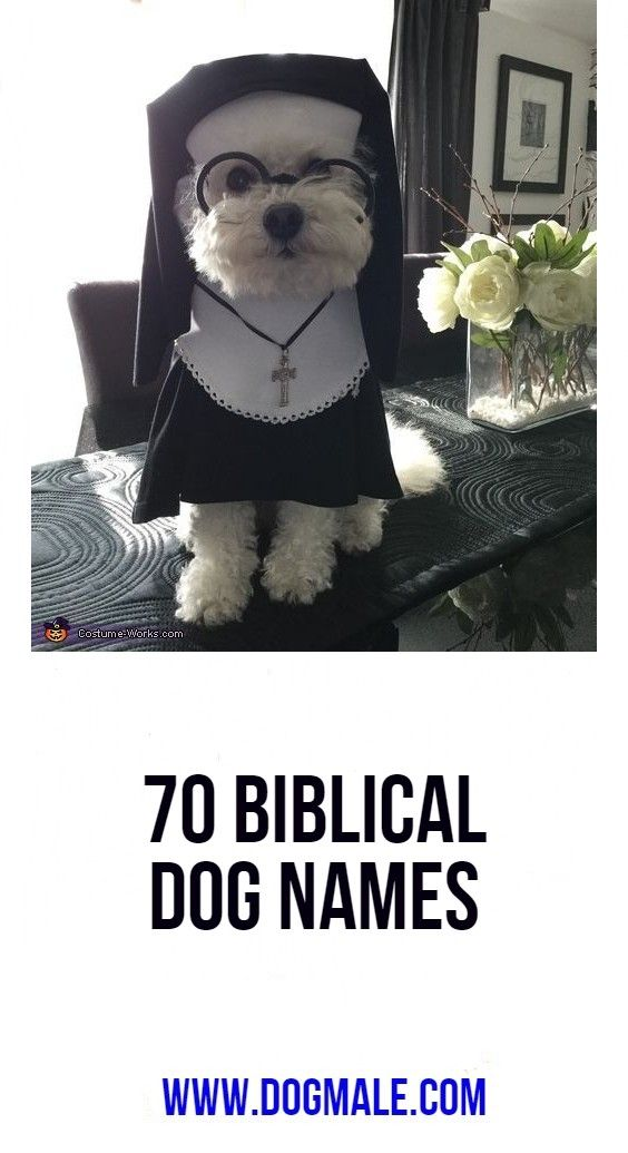 70 Biblical Dog Names Dog Names Cool Pet Names Biblical
