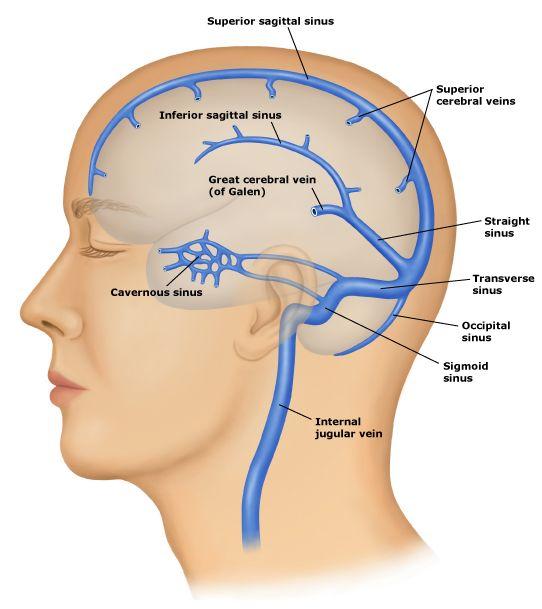 Brain venous sinus anatomy