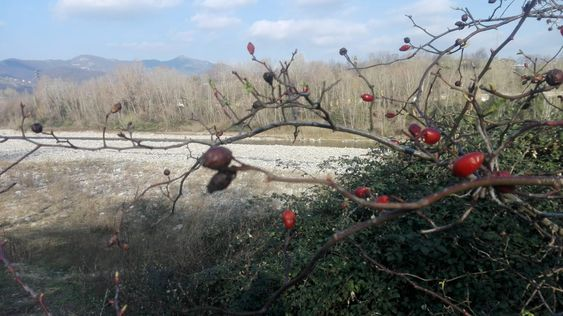 Италия: у приальпийского подножья