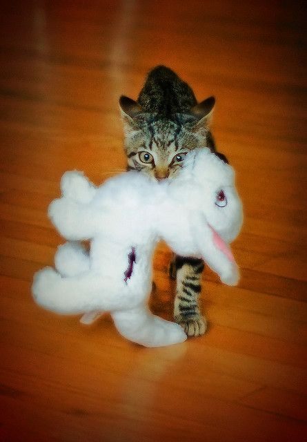 looks like my cat: