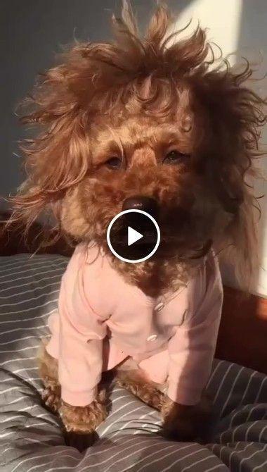 Todos nós temos um bad hair day…
