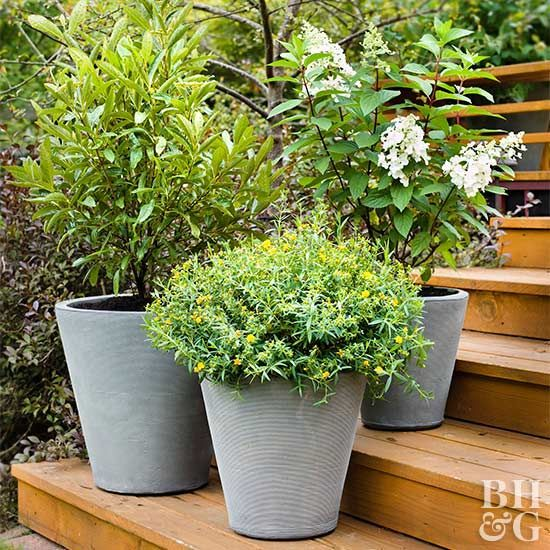 Shrubs For Containers Living With A Small Space Garden Doesn T Mean You Re Limited To Small Flowers Growing Shrubs Garden Shrubs Small Shrubs
